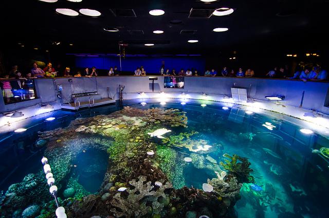 New-England-Aquarium-Triphobo