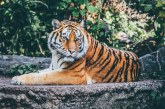 Understanding the Benefits of Reserve Forests for Wildlife Travel