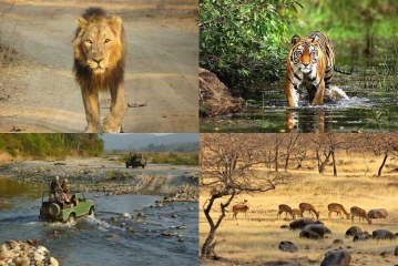 Facts about Top 5 Wildlife Destinations of India