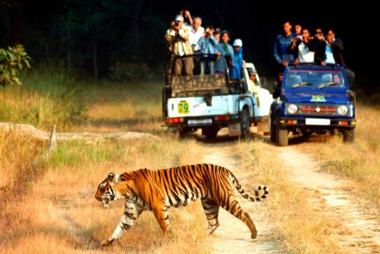 How to Plan a Fun Trip to Jim Corbett National Park