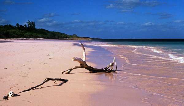 Pink-Sands-Bahamas