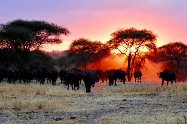 Tanzania-Holidays