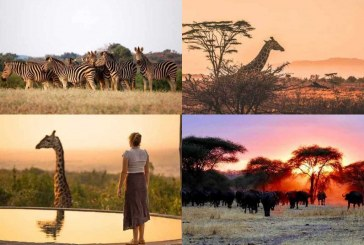 5 Best Destinations for a Safari Holiday