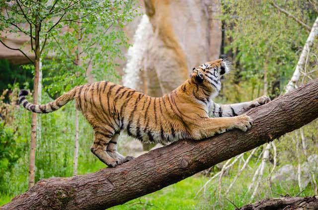 Animal-Zoo-Jacksonville