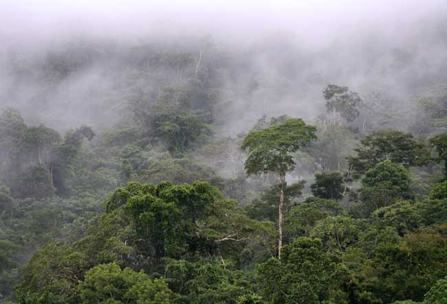 amazon-rainforest-manu-national-park-peru-tour